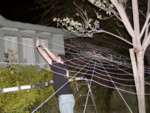 Tim spinning his awe-inspiring web out in the front yard.