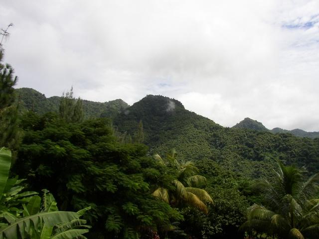 View from La Haut Plantation (Upper House)