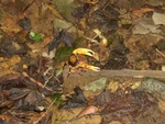 Crab on the hiking trail