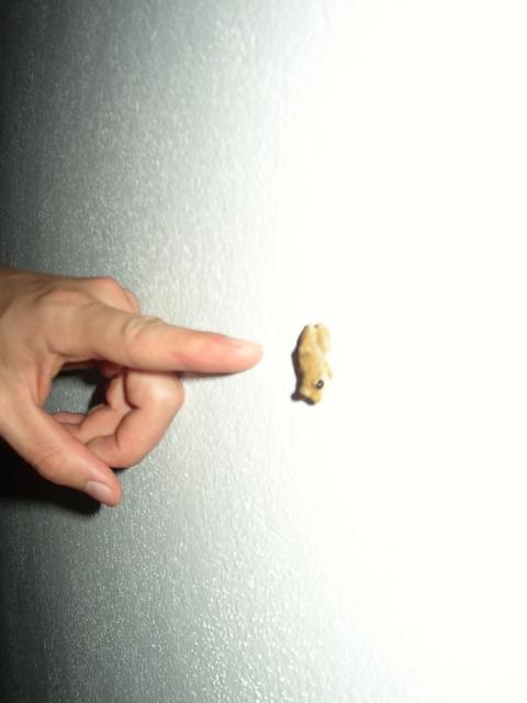 Tree Frog with Ben's Hand